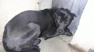 ZOOMI Help pour cette pauvre chienne abandonnée attachée sur une aire de repos ! Elle est très gentille mais demeure terrorisée et refuse de sortir de son box ! Avec de la douceur  et beaucoup d'amour on arrive à beaucoup de chose alors si vous voulez donner du bonheur à cette pauvre chienne venez la rencontrer au refuge et si vous ne pouvez pas vous pouvez la parrainer en attendant son adoption.