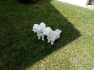 IODA et INDY Ensemble et heureux dans leur nouvelle famille.