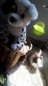 Youmi Petite lapine absolument adorable. Bientôt à l'adoption