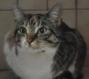 Acacia Femelle 3 ans  elle a vécu dans la rue. C'est une minette très gentille mais elle ne s'entend pas avec les autres chats.