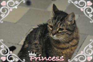 AQUA AQUA Femelle de 6 ans . Elle aime l'exclusivité et n'accepte pas les autres chats. Une boule de tendresse.