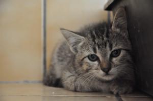 Suricat  Femelle de 2 mois  Toute timide elle vient seulement d'arriver au refuge. Bientôt à l'adoption.