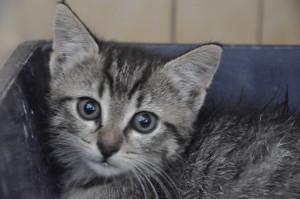 Malaga Femelle de 2 mois, toute timide elle vient tout juste d'arriver. Bientôt à l'adoption.