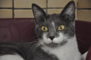 Delphie  Jeune minette. Très sociable et curieuse elle saura faire le bonheur de votre famille. Bientôt à l'adoption.