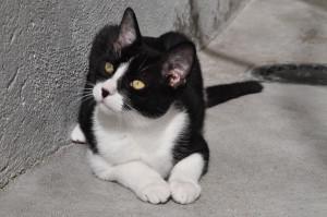 ERMOZ Minou de 6 mois au refuge depuis plus de 3 mois car il est timide quand il ne connait pas. Il adore jouer et est à placer en appartement. Donnez lui sa chance il ne mérite pas de grandir au refuge.