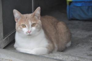 HOLLIDAYS Mâle de 3 ans. Un amour de minou. Ok avec les autres chats. A placer dans un grand appartement ou en maison.