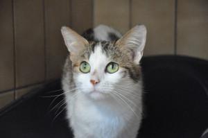 JARAH Femelle de 3 ans.  De petit gabarit elle a des allures de chatons.  Une mademoiselle câlins , elle adore ça !!!!