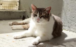 Mimoune Mâle 6 ans minou très gentil et très câlin, convient en appartement. A placer sans autres animaux.