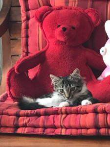 SAPHIR Minette de 4 mois , très jolie et gentille à placer en maison .