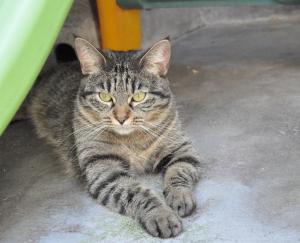 Nala Femelle 2 ans à placer en maison sans jeunes enfants car elle stress facilement, éviter aussi les chats elle en a peur, elle est très câline et joueuse mais elle a besoin d'un environnement calme, elle peut avoir son caractère.