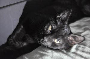 ORACLE Minou timide à placer avec un autre chat et sans jeune enfant.