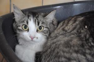 OUATINE Minette toute  nouvelle au refuge, bientôt à l'adoption.