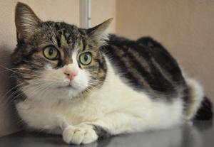 Pistache Femelle 10 ans Elle est calme et câline si elle est en confiance. Elle s'entend avec les chats et peut vivre en appartement.
