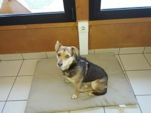 Miguel Mâle de 5 ans sauvé de Serbie ( voir page sauvetage ). Timide mais très gentil. A placer sans autres chiens. De taille moyenne.